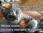 https://lolkot.ru/2014/12/06/syschik/