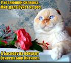 https://lolkot.ru/2017/02/04/syurpriz-dlya-baskova/