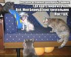 https://lolkot.ru/2017/02/21/tainstvennoye-ischeznoveniye/