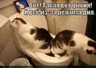 https://lolkot.ru/2012/02/10/takaya-vot-fignya/
