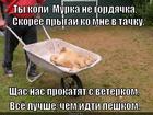 https://lolkot.ru/2015/08/01/taksi-na-dubrovku-zakazyvali-s/