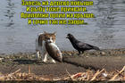 https://lolkot.ru/2015/04/03/tam-na-kryshe/
