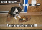 https://lolkot.ru/2012/01/29/tapka-moyey-mechty/