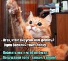 https://lolkot.ru/2020/10/23/tapkovyye-mery/