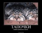 https://lolkot.ru/2011/06/06/tapochki/