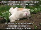 https://lolkot.ru/2015/09/05/tapok-zhalko/