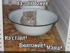 https://lolkot.ru/2011/11/15/tazokotaniye/