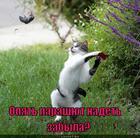 https://lolkot.ru/2013/03/14/teper-pamyat-budet-vechnoy/