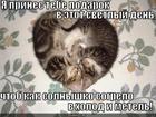 https://lolkot.ru/2014/02/15/teplo-2/
