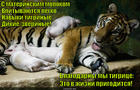 https://lolkot.ru/2015/05/08/tigrokabanchiki/