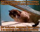 https://lolkot.ru/2013/03/29/tochno-ne-boitsya/
