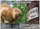 https://lolkot.ru/2010/07/13/tochno-ubyu/