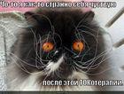 https://lolkot.ru/2010/08/23/tokoterapiya/