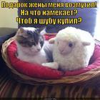 https://lolkot.ru/2014/12/31/tolstyy-namek-2/