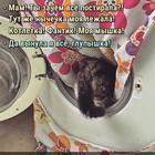 https://lolkot.ru/2017/12/14/totalnaya-postirushka/