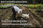 https://lolkot.ru/2013/04/05/travka/