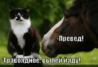 https://lolkot.ru/2010/06/03/travoyadnoye/