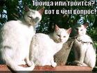 https://lolkot.ru/2011/12/22/troitsa/