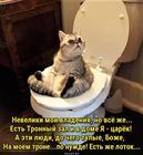 https://lolkot.ru/2017/10/30/tronnyy-lotok/