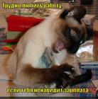 https://lolkot.ru/2012/06/06/trudno-lyubit-rabotu/