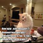 https://lolkot.ru/2015/11/21/trudnosti-figurnyye/