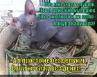 https://lolkot.ru/2014/11/19/trudyaga/