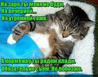 https://lolkot.ru/2019/05/08/tsar-pochivat-izvolit/