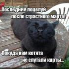 https://lolkot.ru/2016/02/03/tseluy-poka-holostoy/