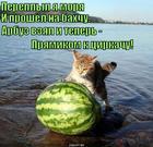 https://lolkot.ru/2014/12/09/tsirkovoye-iskusstvo/