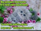 https://lolkot.ru/2019/02/09/tsvetochnaya-igra/