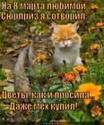 https://lolkot.ru/2014/12/03/tsvety-i-shuba-legko/