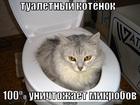 https://lolkot.ru/2011/07/20/tualetnyy-kotyonok-3/