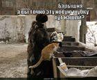 https://lolkot.ru/2010/09/10/tut-nashli/