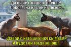 https://lolkot.ru/2014/11/16/ty-s-kakogo-rayona-koshanchik/