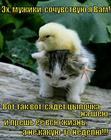 https://lolkot.ru/2015/09/10/tyazhelaya-uchast/