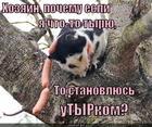 https://lolkot.ru/2014/11/17/tyr-tyrych/