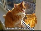 https://lolkot.ru/2011/12/08/u-nas-yesche-leto/