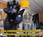 https://lolkot.ru/2016/04/09/uberi-kameru-2/