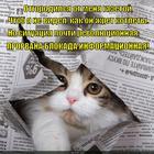 https://lolkot.ru/2014/10/09/uberi-svoyu-gazetu-day-koteyechke-kotletu/