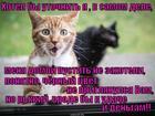 https://lolkot.ru/2015/09/09/udachnaya-rastsvetochka/