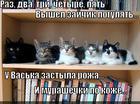 https://lolkot.ru/2014/07/09/udivleniye/