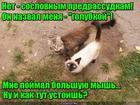 https://lolkot.ru/2016/10/25/uhazher-90-urovnya/