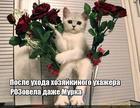 https://lolkot.ru/2019/05/24/uhazher-rozonapravlennogo-deystviya/