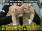 https://lolkot.ru/2015/01/24/ulov-ne-katit/