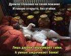 https://lolkot.ru/2020/02/15/umnaya-zakrutka/