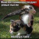 https://lolkot.ru/2011/12/05/umnyye-mysli-2/