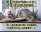 https://lolkot.ru/2014/09/22/umotalsya-2/