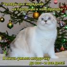 https://lolkot.ru/2017/01/02/umyvatelnaya-naryadka/