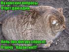 https://lolkot.ru/2020/06/24/universalnyy-otvet/