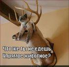 https://lolkot.ru/2011/09/29/upryamoye-zhivotnoye/